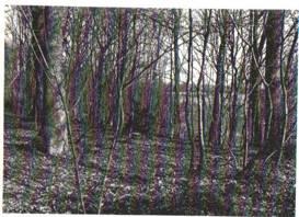 sacred-grove.jpg