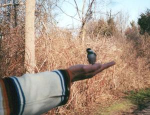 handtamingwildbirds
